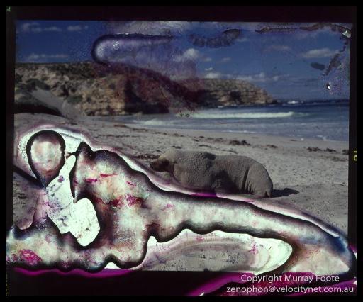 Seal-Bay-0002-Edit