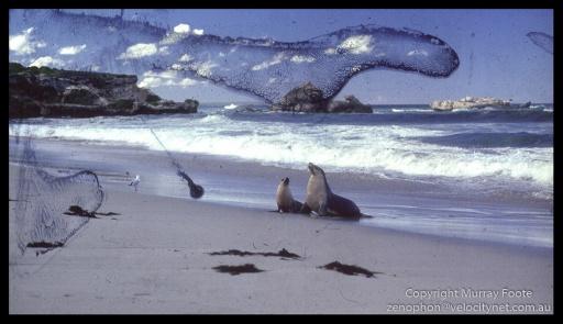 Seal-Bay-0026-Edit