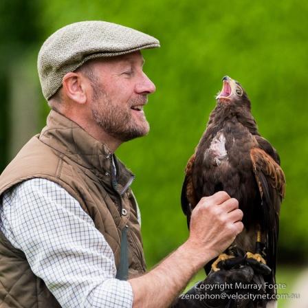 Tickling the Hawk