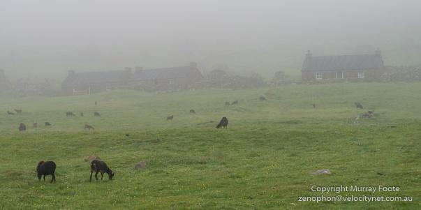 Architecture, Hebrides, History, Landscape, Photography, Scotland, Soay sheep, St Kilda, Travel