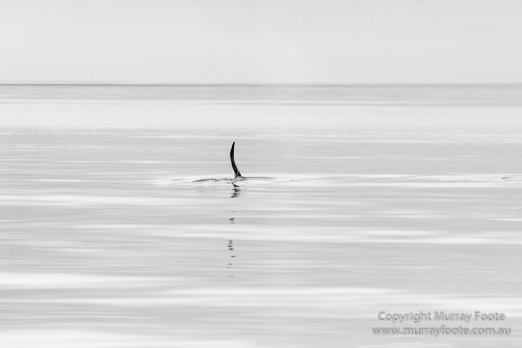 Black and White, Landscape, Monochrome, Nature, Photography, Scotland, seascape, Travel, Wildlife