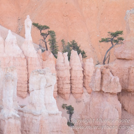 Landscape, Photography, Southwest Canyonlands, Travel, USA