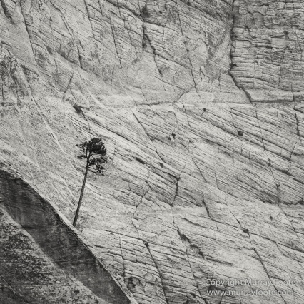 Black and White, Infrared, Landscape, Monochrome, Photography, Southwest Canyonlands, Travel, USA, Utah, Zion Canyon