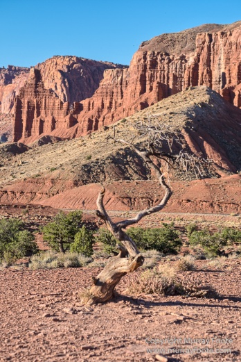 Capitol Reef, Landscape, Photography, Southwest Canyonlands, Travel, USA, Utah