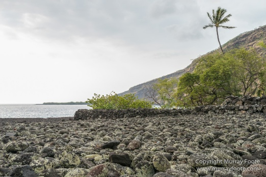 Green Turtles, Hawaii, Hikiau Hieau, Kealakekua Bay, Landscape, Nature, Photography, Punalu'u Black Sand Beach, seascape, The Big Island, Travel, Wildlife