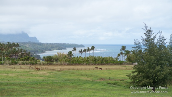 Hawaii, Kalalau Trail, Kauai, Ke'e Beach, Kilauea Lighthouse, Landscape, Moloaa Bay, Photography, Travel