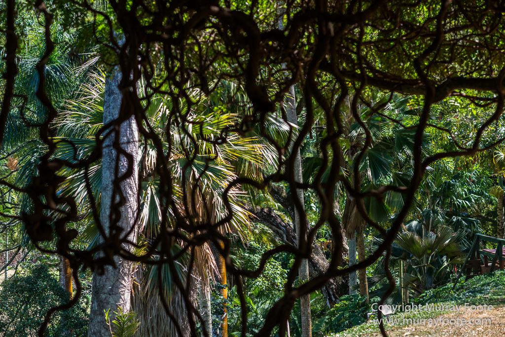 Mcbride garden murray foote - National tropical botanical garden ...