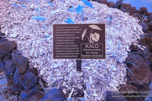 Archaeology, Hawaii, Heiaus, History, Infrared, Kahanu Gardens, Landscape, Maui, Photography, Pi'ilanihale Heiau, seascape, Travel