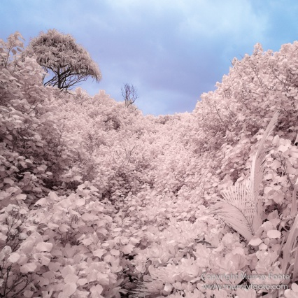 Hana, Hawaii, Infrared, Landscape, Maui, Photography, seascape, Travel, Waianapanapa Black Sand Beach