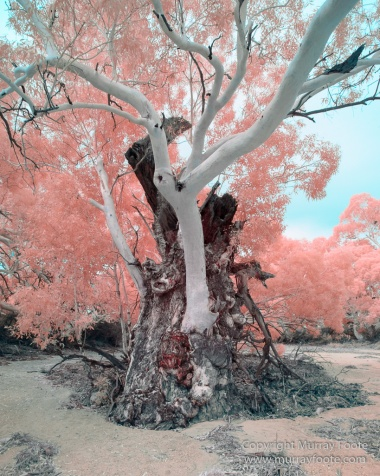Australia, Boolcoomatta, Infrared, Landscape, Nature, Oonartra Creek, Photography, South Australia, Travel