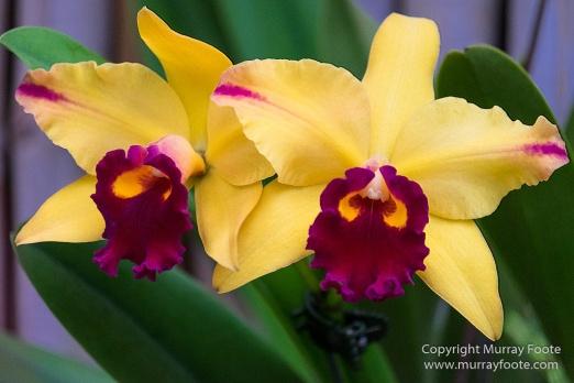 Flowers, Landscape, New Orleans, New Orleans Botanical Garden, Photography, Travel, USA