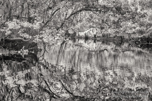Bayou, Black and White, Infrared, Landscape, Monochrome, Nature, New Orleans, Photography, Travel, USA, Wilderness