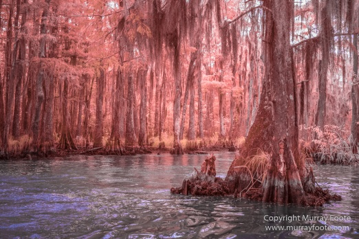 Bayou, Infrared, Landscape, Mississippi River, Nature, New Orleans, Photography, Travel, USA, Wilderness