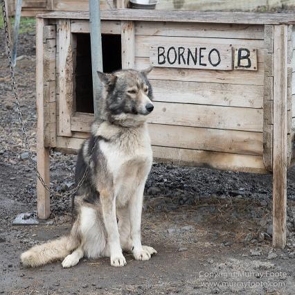 Coal, History, Huskies, Longyearbyen, Nature, Photography, Reindeer, seascape, Spitsbergen, Travel, Wildlife