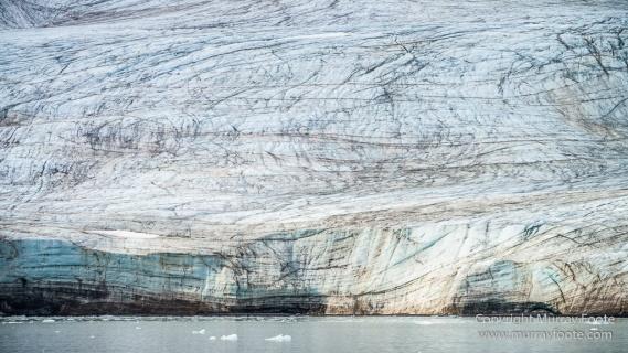 Black guillemot, Glacier, Kittiwake, Lilliehöökbreen, Nature, Photography, seascape, Spitsbergen, Travel, Wilderness, Wildlife