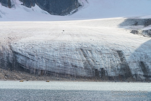 Glacier, Harbour Seals, Icebergs, Nature, Photography, seascape, Smeerenburg, Spitsbergen, Travel, Wilderness, Wildlife