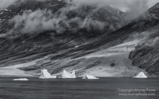 Arctic Hare, Black and White, Glacier, Greenland, Humpback whale, Landscape, Monochrome, Musk Ox, Photography, seascape, Travel, Wilderness, Wildlife