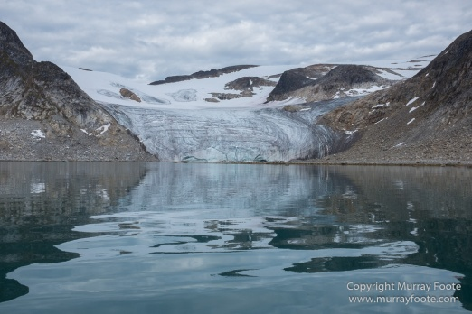 Glacier, Guillemots, Hamiltonbukta, Icebergs, Nature, Photography, Polar Bears, seascape, Spitsbergen, Travel, Walrus, Wilderness, Wildlife