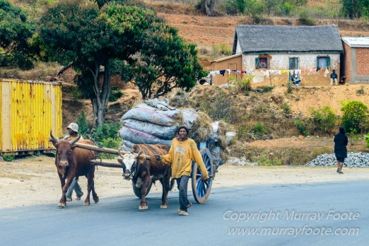 Antananarivo, Architecture, Chameleons, Gecko, Landscape, Lemurs, Macro, Madagascar, Peyrieras Reserve, Photography, seascape, Street photography, Tenrec, Travel, Wildlife7