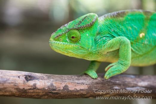 Antananarivo, Architecture, Chameleons, Gecko, Landscape, Lemurs, Macro, Madagascar, Peyrieras Reserve, Photography, seascape, Street photography, Tenrec, Travel, Wildlife