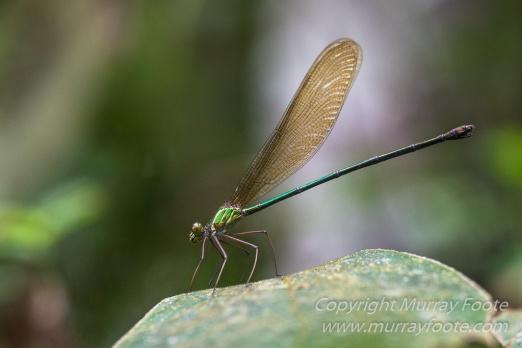 Andasibe, Chameleons, Gecko, Landscape, Lemurs, Madagascar, Mantadia, Photography, Travel, Wildlife