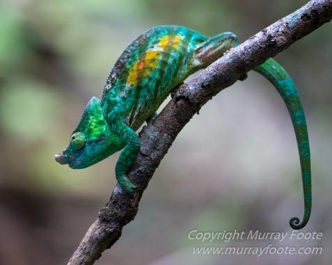 Andasibe, Chameleons, Gecko, Landscape, Lemurs, Madagascar, Mantadia, Photography, Street photography, Travel, Wildlife