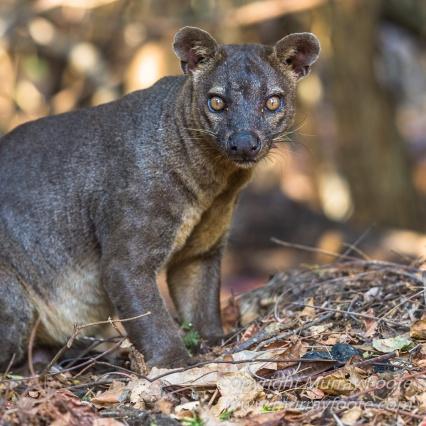 Baobabs, Kirindy, Landscape, Lemurs, Madagascar, Photography, Street photography, Travel, Wildlife