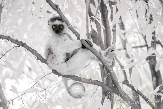 Berenty, Infrared, Landscape, Lemurs, Macro, Madagascar, Mantadia, Nature, Photography, sifaka, Travel, Wildlife