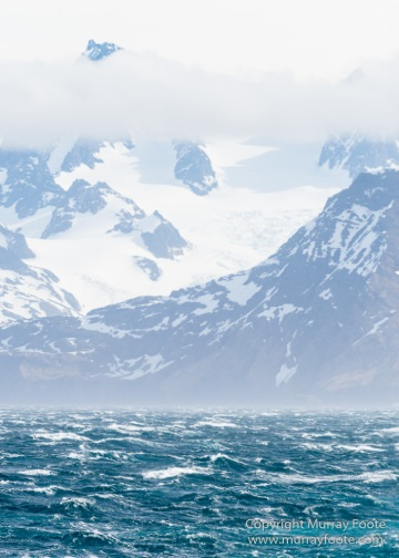 Antarctica, Elephant seals, Gold Harbour, Landscape, Nature, Photography, seascape, South Georgia, Travel, Wilderness, Wildlife