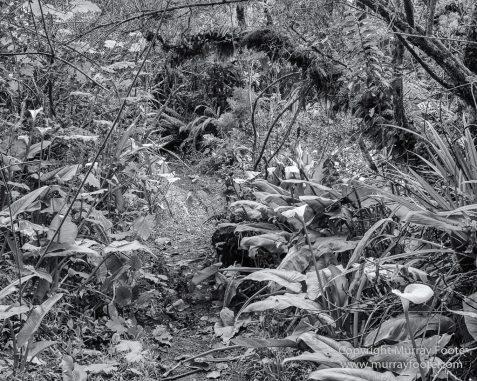 Architecture, Cilaos, Forêt de Bébour, Grand Galet, Hell-bourg, Landscape, Le Maido, Macro, Nature, Photography, Piton Sainte Rose, Reunion, Travel, Vieux port, Wilderness