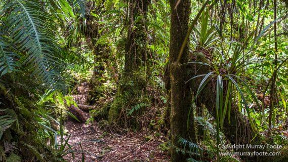 Architecture, Forêt de Bébour, Landscape, Macro, Nature, Photography, Reunion, seascape, Travel, Wilderness