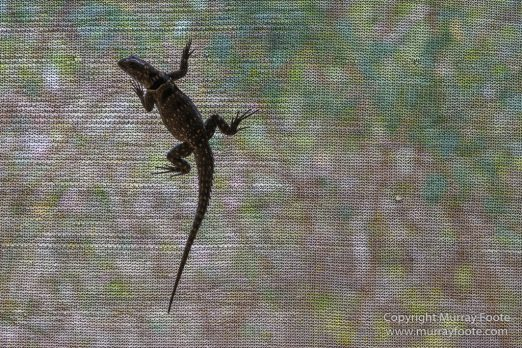 Bats, Boa, Gecko, Madagascar, Marozevo, Nature, Nile crocodile, Peyrieras Nature reserve, Photography, Skinks, Snake, Travel, Wilderness, Wildlife