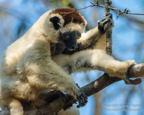 Kirindy, Landscape, Lemurs, Madagascar, Morondava, Nature, Owls, Photography, Travel, Wildlife