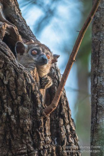 Kirindy, Landscape, Lemurs, Madagascar, Morondava, Nature, Owls, Photography, Travel, Wildlife