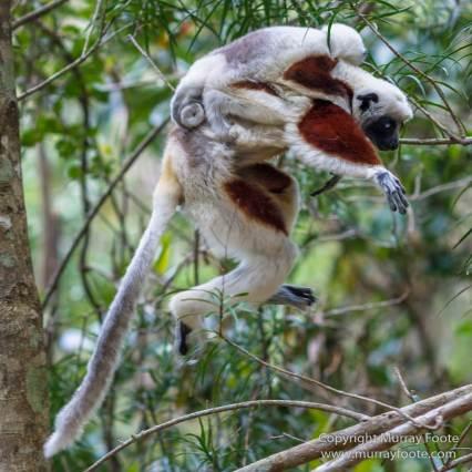 Architecture, Landscape, Madagascar, Marozevo, Nature, Peyrieras Nature reserve, Photography, Travel, Wilderness, Wildlife