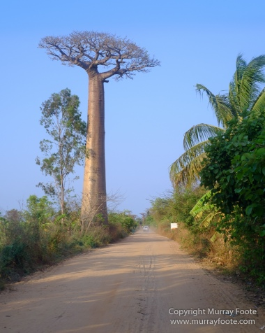 Avenue of the Baobabs, Landscape, Madagascar, Morondava, Photography, Street photography, Travel