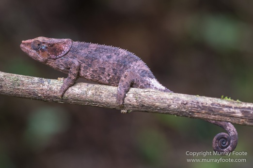 Chameleons, Collared Nightjar, Frog,Gecko, Indri, Landscape, Leaf-tailed Gecko, Lemurs, Madagascar, Mantadia, Nature, Photography, Travel, Wilderness, Wildlife