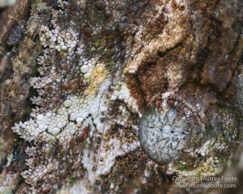 Chameleons, Collared Nightjar, Frog,Gecko, Indri, Landscape, Leaf-tailed Gecko, Lemurs, Madagascar, Mantadia, Nature, Photography, Travel, Wilderness, Wildlife