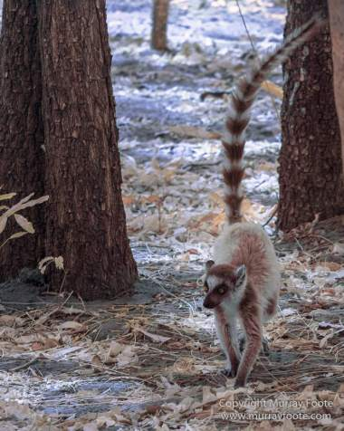 Berenty, Infrared, Landscape, Madagascar, Nature, Photography, Ringtailed Lemur, Travel, Wildlife