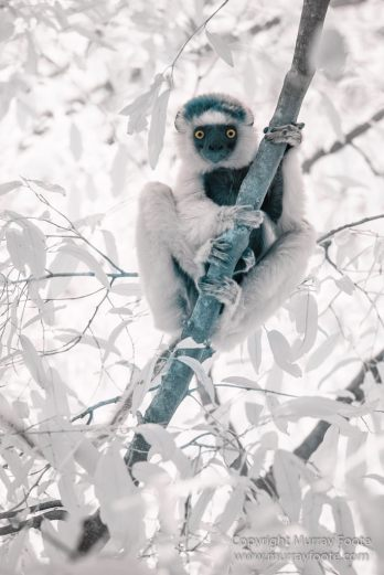Berenty, Infrared, Landscape, Madagascar, Nature, Photography, Ringtailed Lemur, Travel, Wildlifet