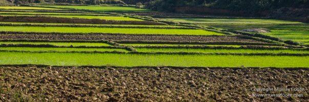Andasibe, Antananarivo, Landscape, Madagascar, Photography, Street photography, Travel