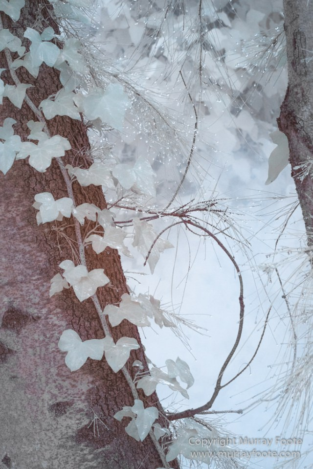 Art, Australia, Australian National Gallery, Canberra, Infrared, Landscape, Nature, Photography, Sculpture, Travel, Wildlife