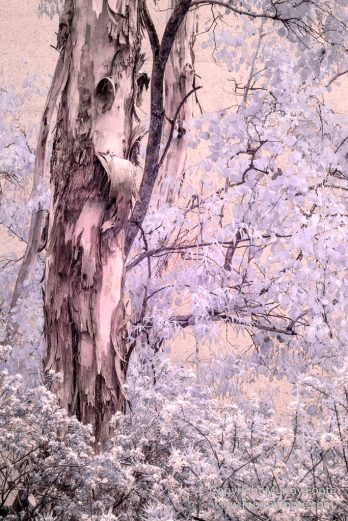 Art, Australia, Australian National Gallery, Canberra, Infrared, Landscape, Nature, Photography, Sculpture, Travel, Wildlife