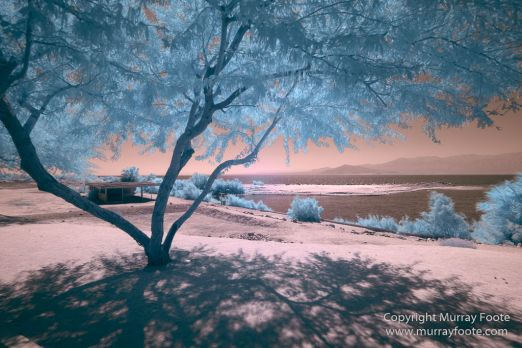 Art, Infrared, Joshua Tree National Park, Nature, Photography, Salton Sea, Sculpture, Travel, USA, Wilderness, Wildlife