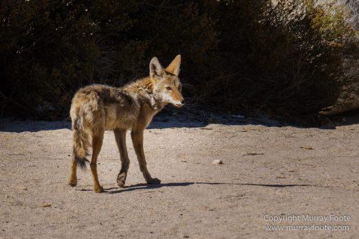Art, Infrared, Joshua Tree National Park, Nature, Photography, Salton Sea, Sculpture, Travel, USA, Wilderness, Wildlife