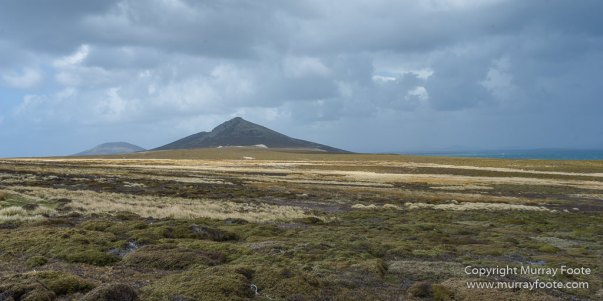 Falkland Islands, Landscape, Nature, Pebble Island, Photography, seascape, Travel, Wilderness