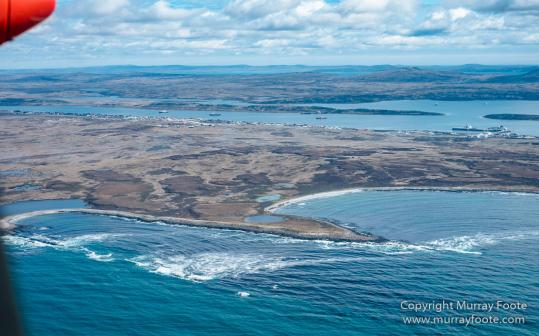 Falkland Islands, Landscape, Nature, Penguins, Photography, Rockhopper Penguins, seascape, Travel, Wilderness, Wildlife