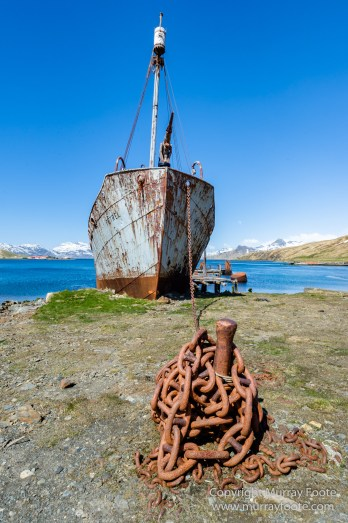 Grytviken, King Penguins, Landscape, Nature, Photography, Rust, seascape, South Georgia, Travel, Whaling, Wilderness, Wildlife