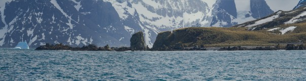 Drygalski Fjord, Icebergs, Landscape, Nature, Photography, seascape, South Georgia, Travel, Wilderness