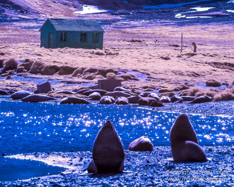 Elephant seals, Infrared, Landscape, Nature, Photography, seascape, South Georgia, South Georgia Cormorant, Travel, Whaling, Wilderness, Wildlife, Wreck